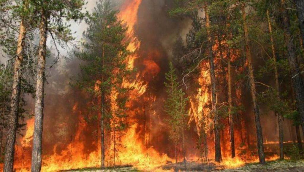 Лесные-пожары-в-Якутии-2021